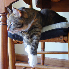 Gracie 3 August 2009 7942bp sq (edgarandron - Busy!) Tags: cats cute cat gracie feline tabby kitty tortoiseshell kitties tortie torbie