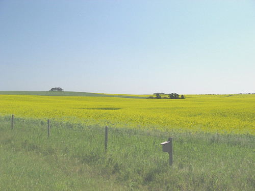 Little house on the canola field