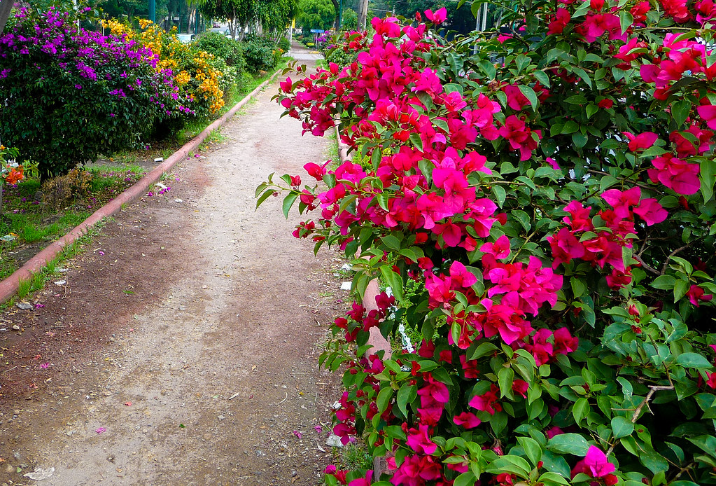 Flowery Respite