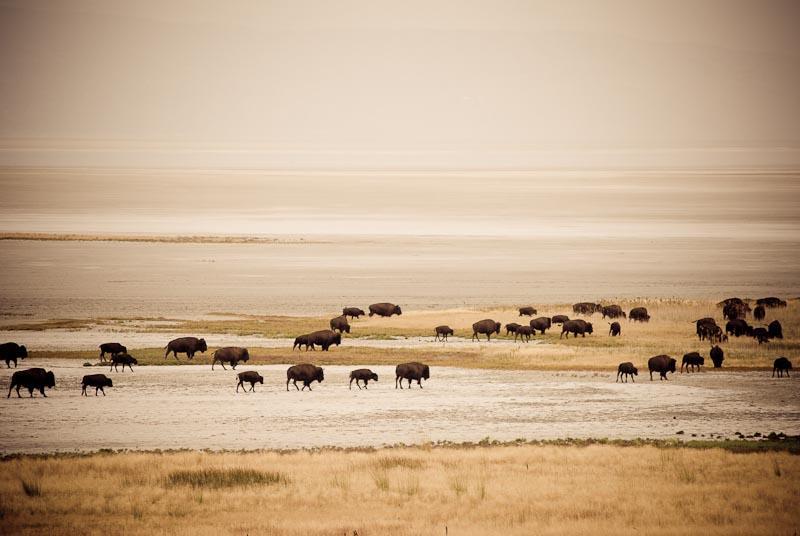 Antelope island-10