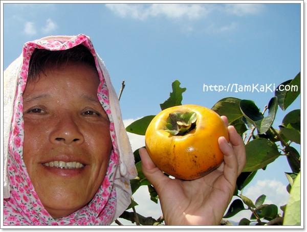 【限定品】09年好吃美味的幸福甜柿開賣!