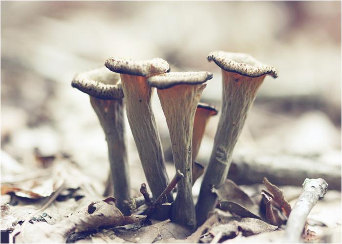 Trumphets of fungus