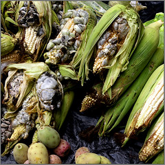 Huitlacoche (uteart) Tags: mexico corn market fungus delicacy huitlacoche rainyseason utehagen uteart theauthorsplaza