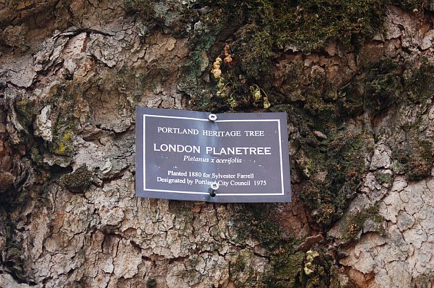 DSC_0040_sign_on_tree