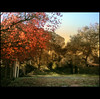 ...um cantinho de Campos (MarthaMGR ❀I´m back again❀) Tags: red nature rouge natureza vernissage 1000views landscaps camposdojordão mmgr theunforgettablepictures vosplusbellesphotos marthamgr reservaespecial 4m´sphotographicdream 3msroyalflowers 2m´sroyalstation marthamariagrabnerraymundo marthamgraymundo