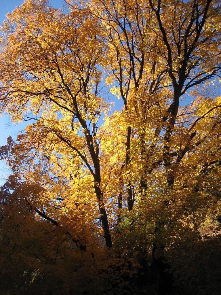 Fall Foliage 2009 001