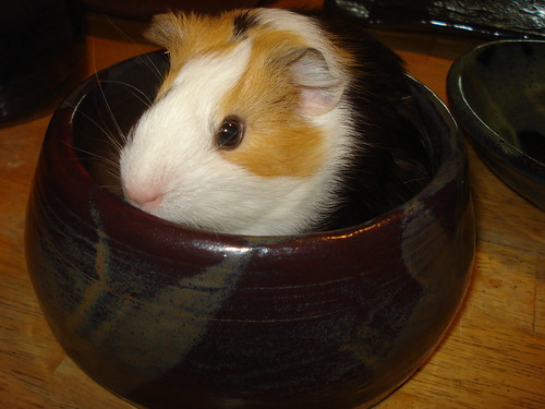mia in a pot