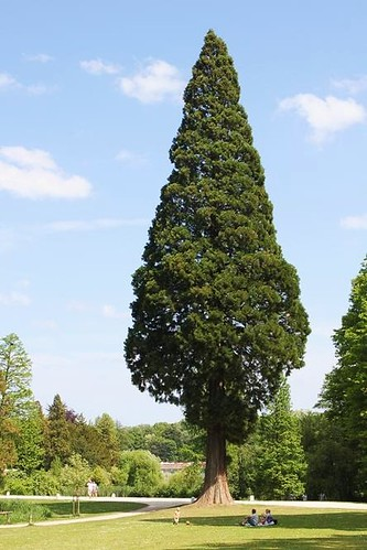 beautiful big tree in castle park
