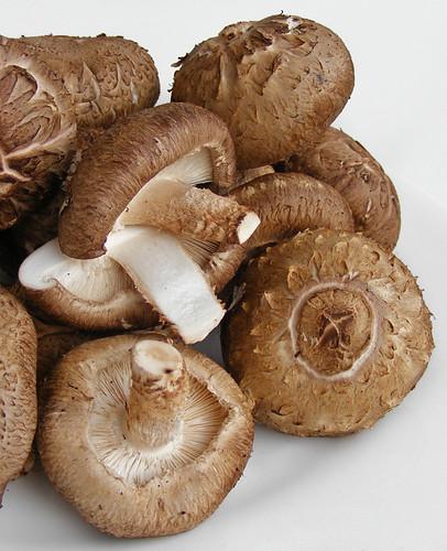 shiitake paddenstoelen