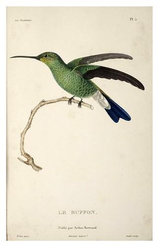 021-Les Trochilidées ou les Colibris et les Oiseaux-Mouches… 1832- René Primevère Lesson- DGZ–Göttinger Digitalisierungszentrum