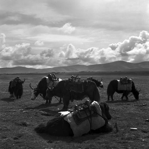 tibet2009_13