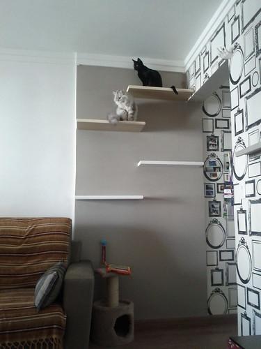 Prateleira para gatos :)