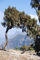 Semien Mountains, Ethiopia (Marjan de B) Tags: travel trees vacation mountains slr digital nikon scenery ethiopia 2008 semien d80 deblaauwpix