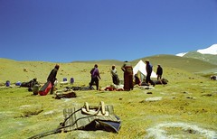 Lamma La 5120m (reurinkjan) Tags: 2002 yak nikon tibet everest dri tingri jomolangma tibetanlandscape lammala janreurink བོད། བོད་ལྗོངས།