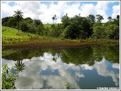 Cerrado (Charline Messa) Tags: tree minasgerais nature landscape natureza paisagem cerrado rvore montecarmelo