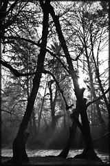 McCormick Park, Milton Creek St. Helens Oregon (RickyB-Photography) Tags: seattle park sunset blackandwhite flower tree bird oregon barn sunrise canon portland washington nikon colorful bright balloon olympus panasonic columbiariver waterfalls rainier longview hdr sthelens d3 columbiacity selectivecolor d300 d90 scappoose lx5 d300s