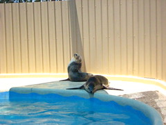 Lazy seals (makisa) Tags: harbour coffs