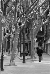 (Raymond Wealthy) Tags: street old people blackandwhite bw espaa white man black tree blancoynegro umbrella person persona blackwhite calle spain nikon europe gente noiretblanc walk streetphotography bn via espana paseo solo rbol lone lonely aged anciano rue espagne paraguas spanien gens ombrello seul noirblanc parapluie streetshot blanconegro lonesome blckwhite lagente nikond80 blancoenegro raymondwealthy
