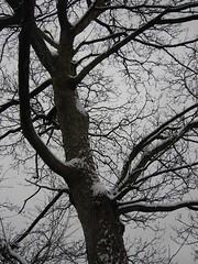 Delph Snow 14