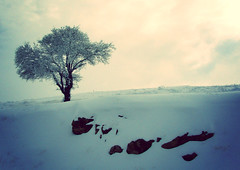 (BeHiNaZ) Tags: winter snow tree nature hill      interestingshot      x