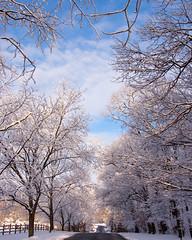 glory (nosha) Tags: blue trees winter sky usa snow beauty newjersey nikon january nj f10 bms covered 24mm february pastoral avenue 2009 snowcovered lightroom beutiful hpw d40 nosha 18200mmf3556 nikond40 january2009