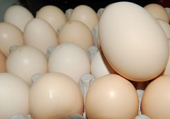 1 egg is 2 big (jungle mama) Tags: chickens soft fuzzy chick poultry eggs crates eggcarton fresheggs chickenegg chickeneggs softandfuzzy largeegg eggsforsale hialeahfl bigchickenegg eggsincrate