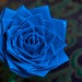 blue duct tape rose