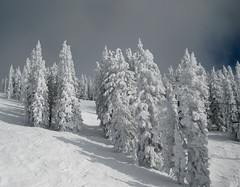 Ice on the Pines (*Kid*Doc*One*) Tags: ski frank colorado skiing greg lynn steamboat deb skitrip dibona anawesomeshot