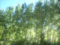 CURUNINAS Y COCHIGUAZ 084 (Moninalaregia) Tags: 2009 febrero veraneo cochiguaz