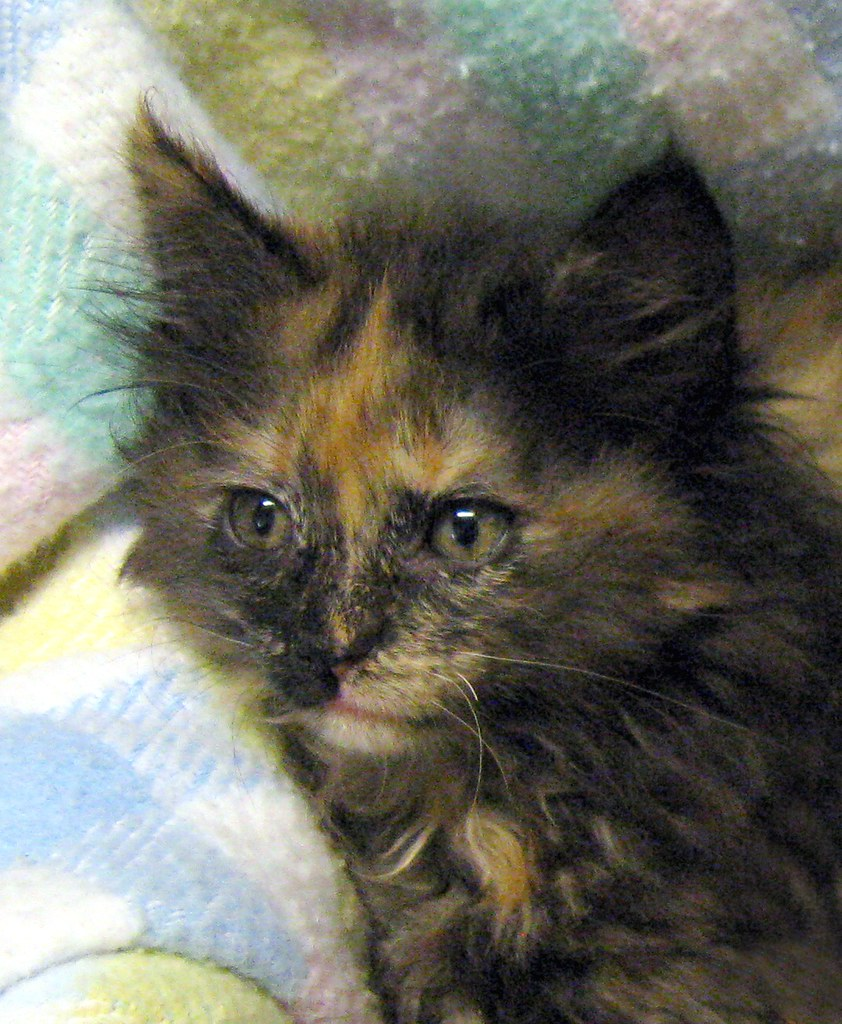 The Only Torti Member of the Cleaning Crew Litter ~ Name is Chlorox, Goo-B-Gone or Electrasol ~ I have to check