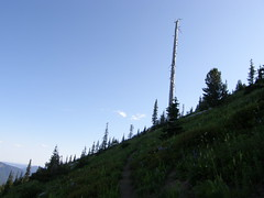 Snag heading back north on Crystal Peak trail.