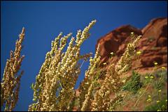 Contrasts (Jonmikel & Kat-YSNP) Tags: redrockcanyon flowers blue red summer sky plant june rock sage vip wyoming wy lander tnc thenatureconservancy otw redcanyonranch