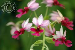 ZA Orchids