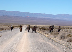 Argentina 2009- 003