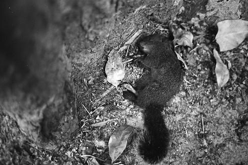 松鼠之死 II