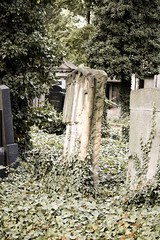 Prague_20090823_204 (negotiable_me) Tags: plants cemetery prague places czechrepublic melancholy jewishcemetery 2009 funereal pragueikov