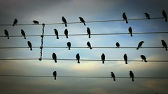 Birds on the Wires on Vimeo by Jarbas Agnelli (burgessburghardt) Tags: sky music birds composition photo vimeo song flute wires orchestra classical xylophone logic aftereffects arrange