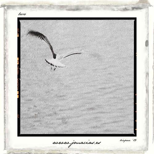 J. Macias - Photography |02