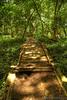 An Old Trail Footbridge (adcristal) Tags: park old bridge nature animal forest foot zoo farm philippines nikond70s trail jungle crocodile croc hdr naturepark puertoprincesa palawan crocodilefarm barangay irawan tamron1750mmf28 palawanwildliferescueandconservationcenter