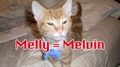 microchip cat