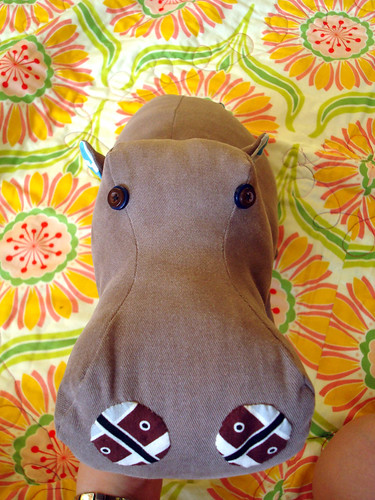 hippo on SFQ 1