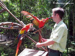 IMG_1306-WDW-DAK-pair-scarlet-macaws