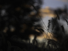 Autumn whispers #11 (Lumase) Tags: sunset shadow tears dusk floating ears presence thanku autumnwhispers