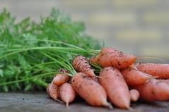 hur nyttigt är morötter