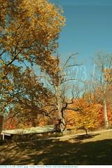 2009-10-26 0597 Fall in Indiana - Holliday Park, Indianapolis Indiana (Badger 23 / jezevec) Tags: park autumn trees orange tree green fall nature leaves yellow forest season arbol leaf log woods timber indianapolis herbst indiana boom foliage environment otoo  arvore holliday albero autunno arbre 2009 strom baum outono puno treet  pokok  aa koks   copac   drzewo  jezevec mti medis arbore crann drevo cy     auomne   deherfst badger23 20091026 sira