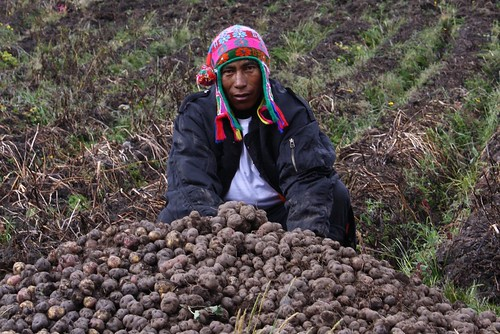 Putisino posing with potato harvest
