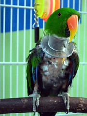 Joe (RLBrinkman~in and out-mostly out) Tags: birds pars parrots parrotsr4ever