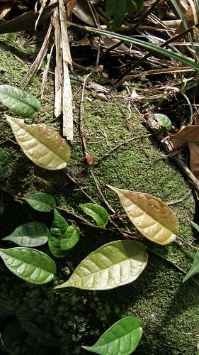 084.陽光灑在樹葉上