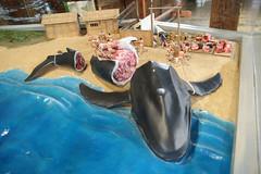 あわれバランバランなクジラ