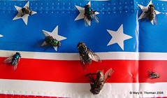 Flying the Flag (Mary Thorman) Tags: blue red white america insect stars fun fly whimsy unitedstates stripes flag humor banner insects american flies ribbon july4th independenceday playonwords visualpun notyournormalbug